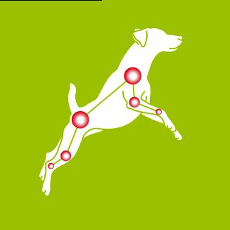 Perros peque/ños  10 kg Collar para Perro YOOS Alivia el Dolor Articular Mejor Movilidad