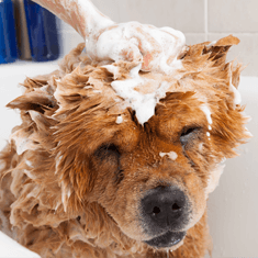 laver un chien