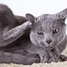 HOW TO HELP YOUR CAT'S SKIN ALLERGIES