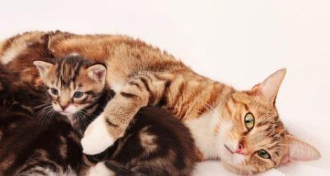 Gata com o seu gatinho
