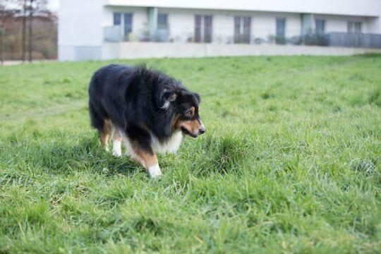 cane affronta situazioni difficili