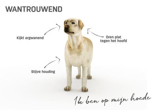 Lichaamstaal hond - wantrouwend