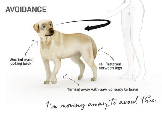 Dog body language - retreating