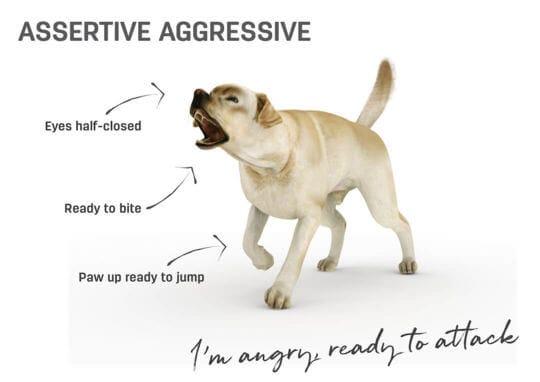 lenguaje corporal perro - agresivo