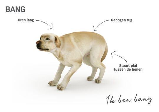 Lichaamstaal hond - bang