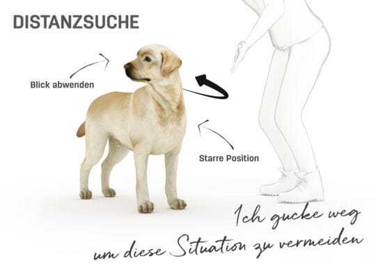 Körpersprache Hund Video