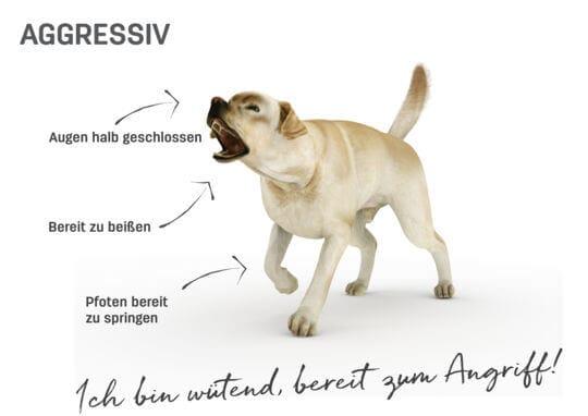 Hundegesten Körpersprache beim