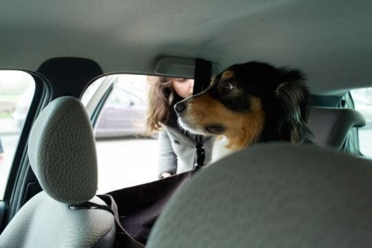 Hund som inte gillar att åka bil