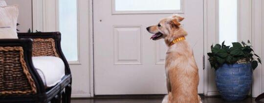 Hund Alleinlassen