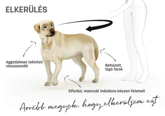 Kutya testbeszéd - elkerülés