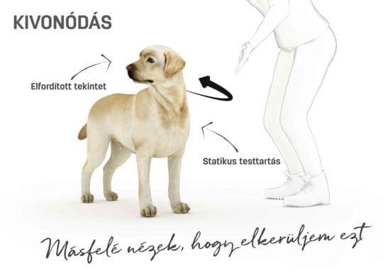 Kutya testbeszéd - kivonódás