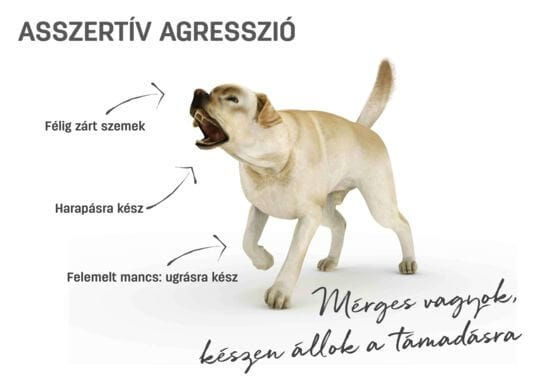 Kutya testbeszéd - asszertív agresszió