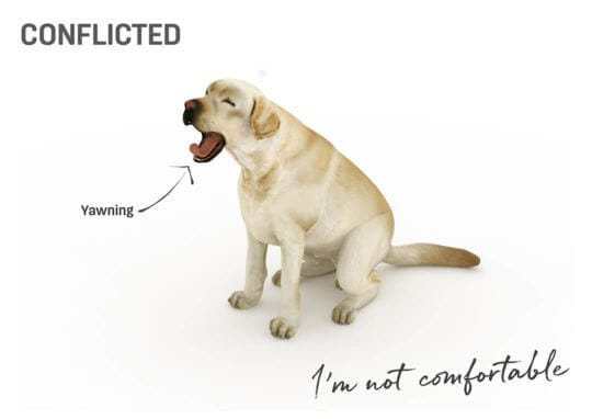 conflicted dog body language