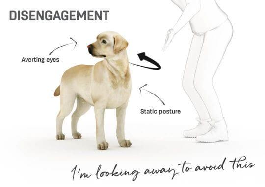 lenguaje corporal perro - evitar algo