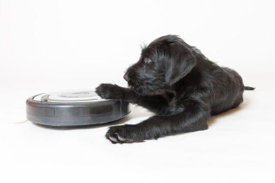 Een nieuwe omgeving kan eng zijn voor puppy's.
