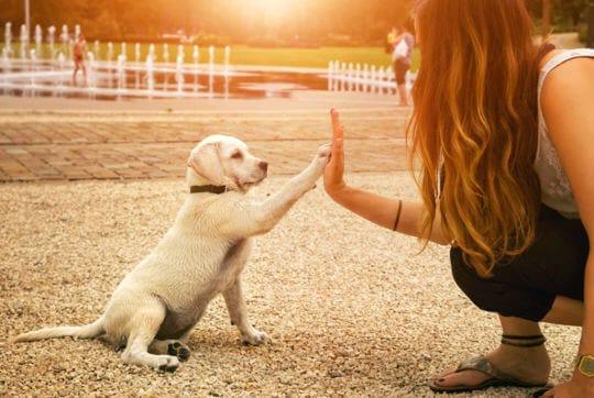 Puppy's leren sneller en beter met de ADAPTIL Junior Halsband