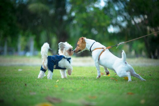 непознатите кучета са страшни за кученцето
