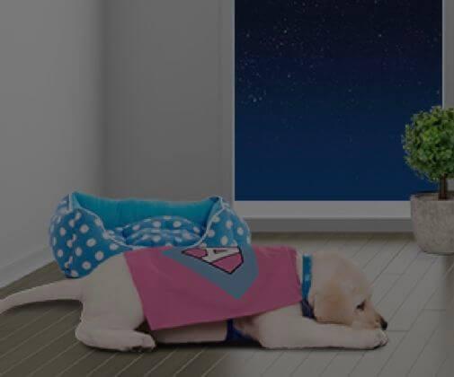 Gece ağlayan yavru köpek
