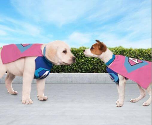 Sosyal yavru köpek