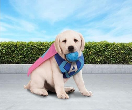 Tips voor puppy training.
