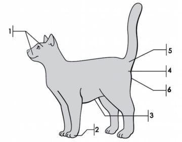 parts of the cat that produce pheromones