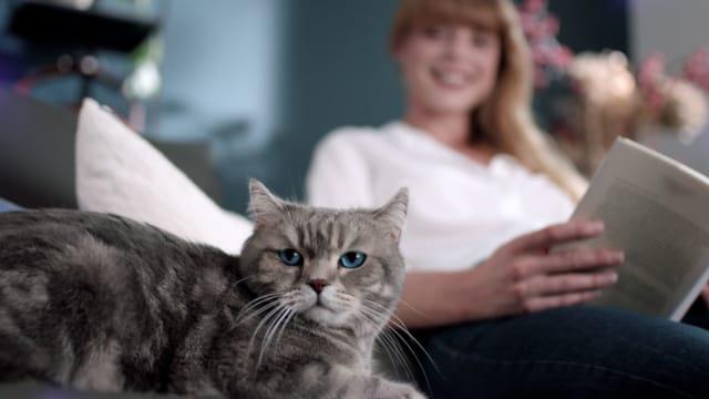 FELIWAY Optimum Katze und Besitzer