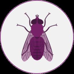 Stable Flies