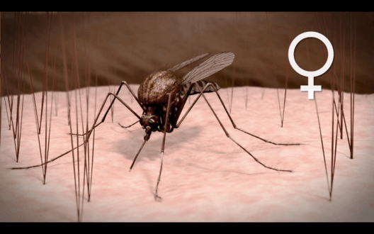 Komáři