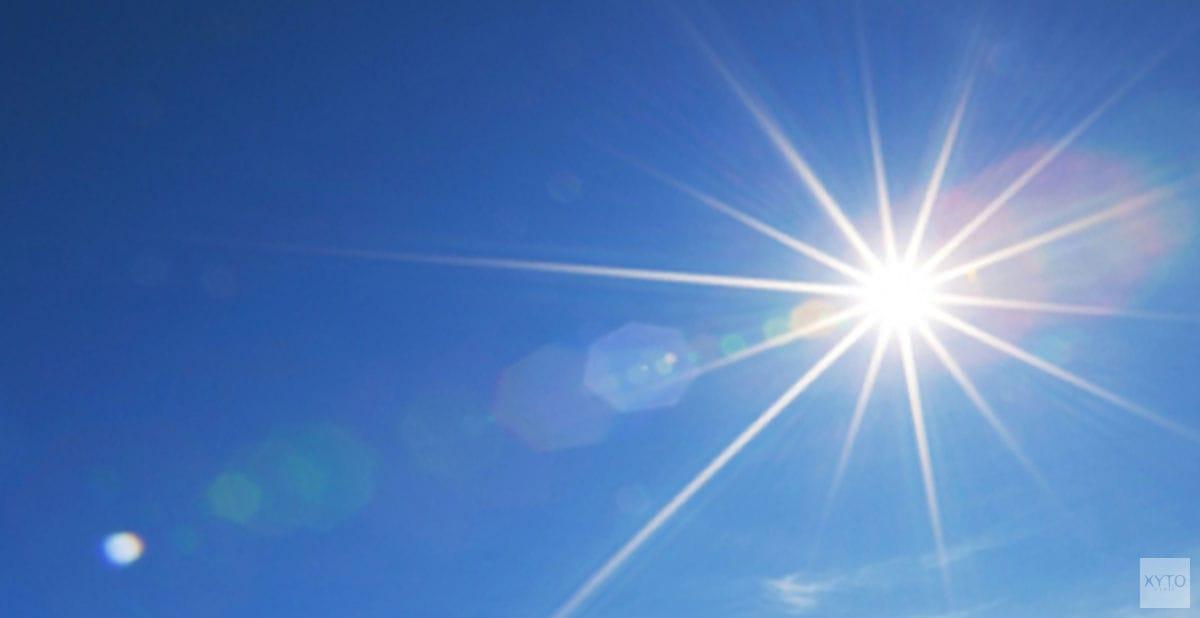 De gevaren van de zomer voor jouw hond en kat