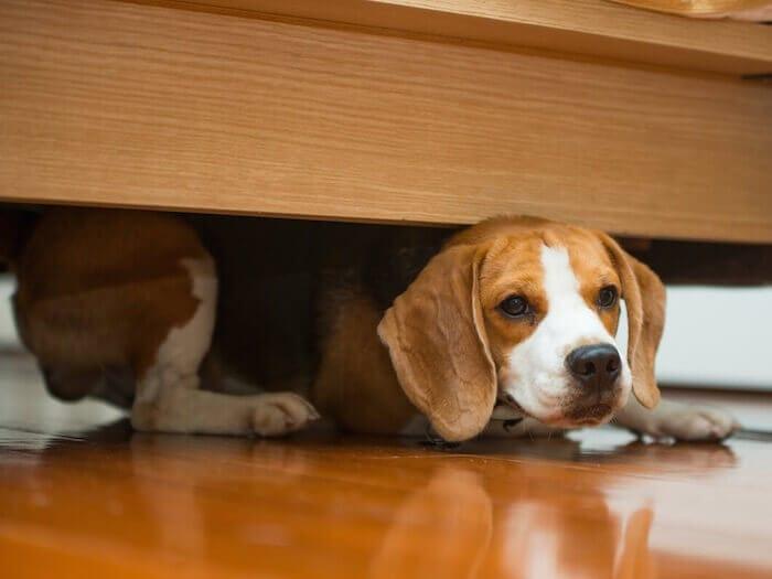 Cão Medo Visitas