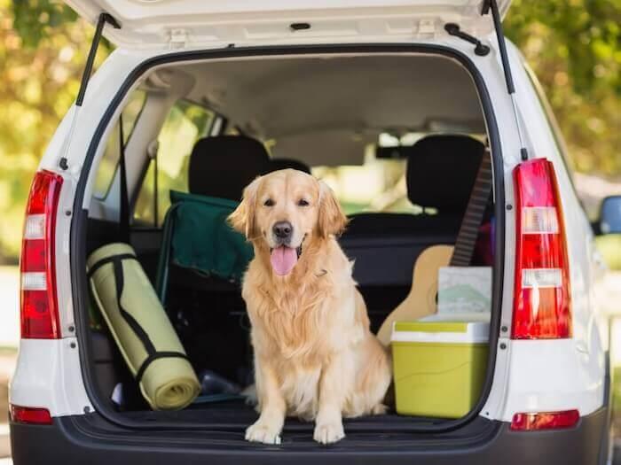 Cão viagem