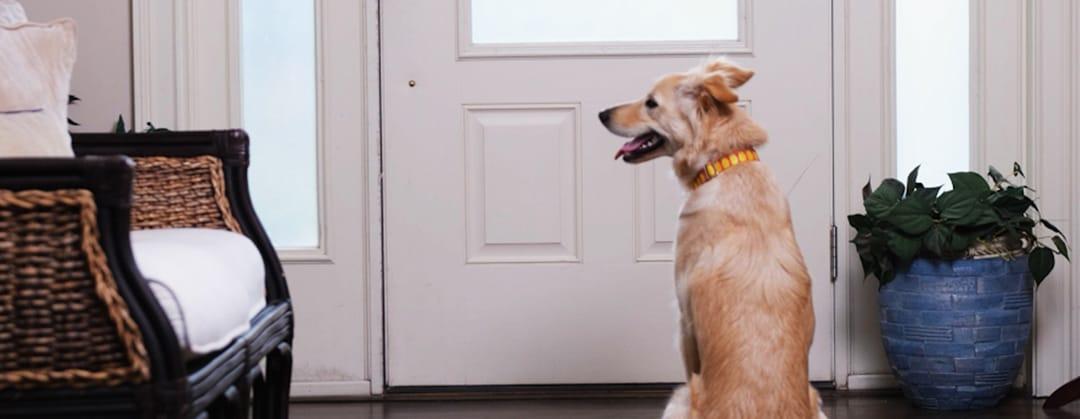 Hund allein lassen