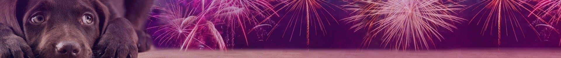 Kutya és tűzijáték