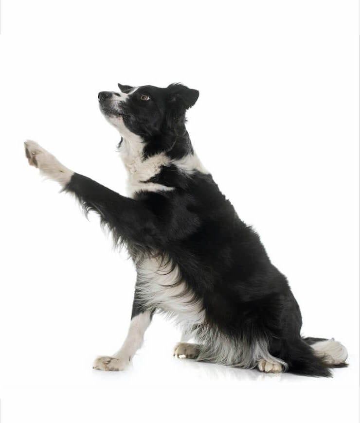 Is Dog Spray Legal In Canada