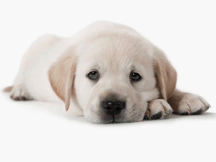 puppy home alone