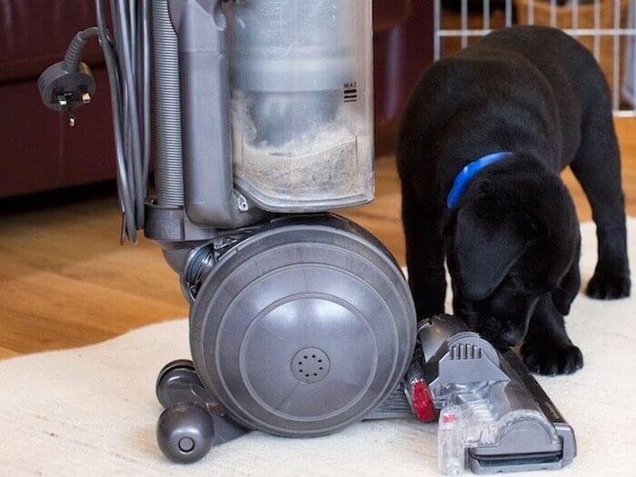 puppy leren omgaan met angst voor harde geluiden
