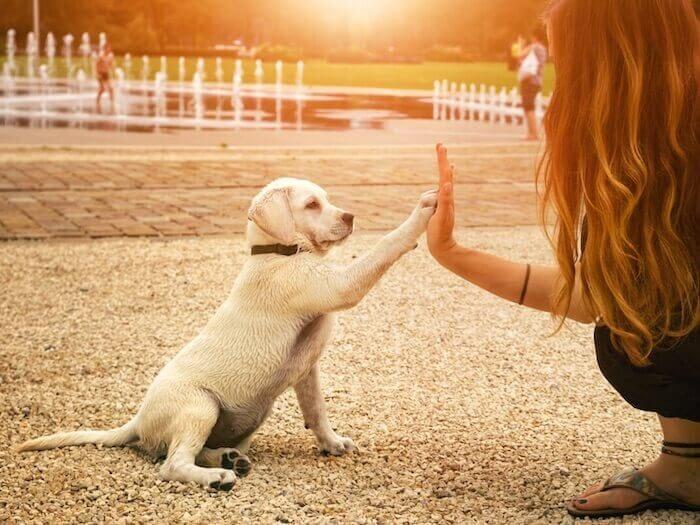 Tips voor trainen en socialiseren van een puppy