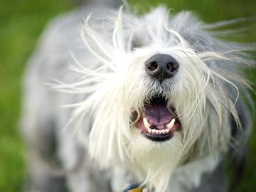 Very stressed dog