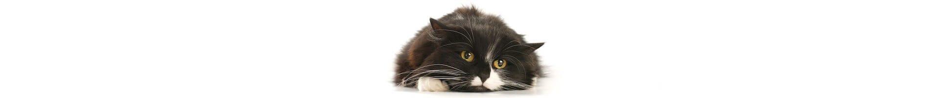 紧张的猫咪