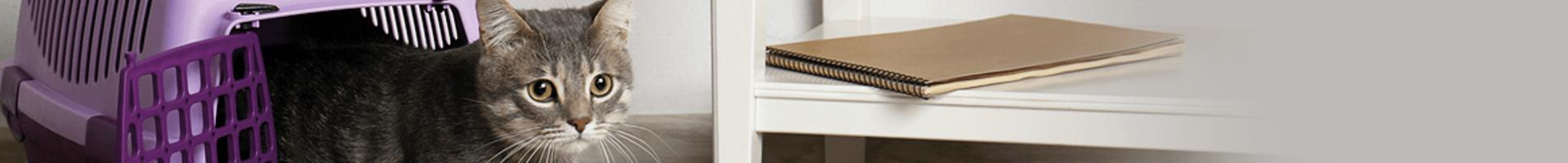katzen im urlaub in die katzenpension. Black Bedroom Furniture Sets. Home Design Ideas
