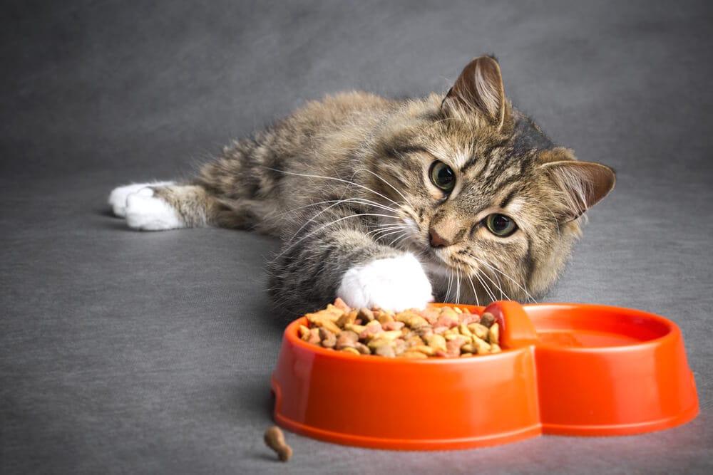 Resultado de imagem para gato comendo