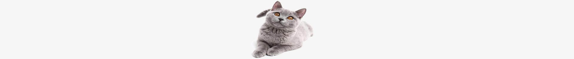 cats behaviour