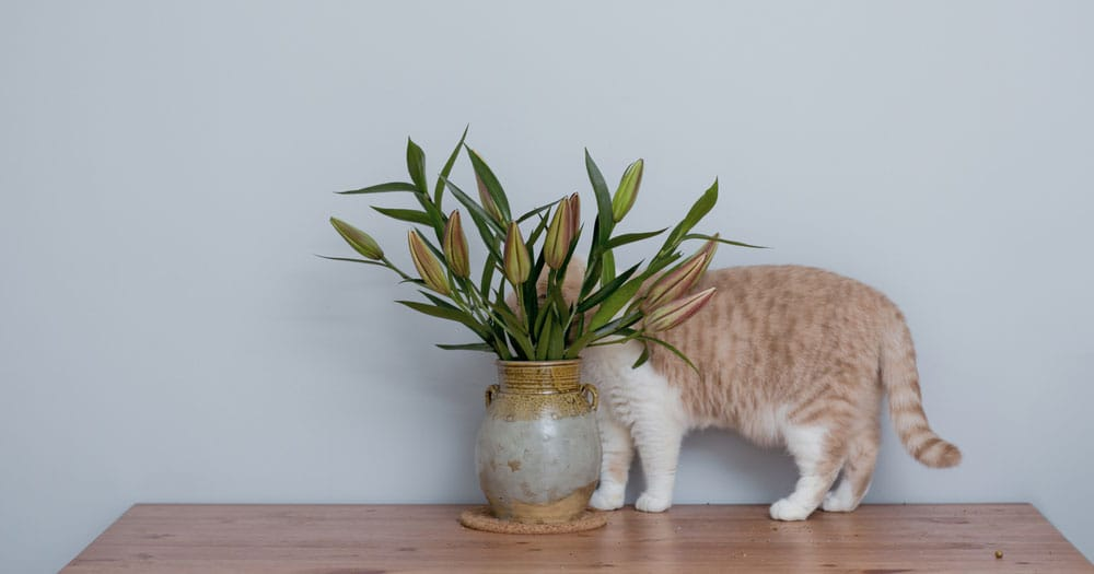 cat trying to hide behind a flower pot