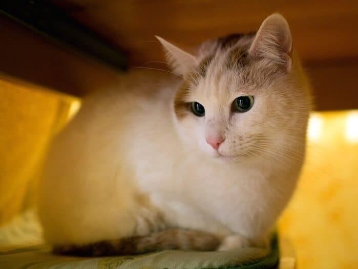 Bujkáló macska
