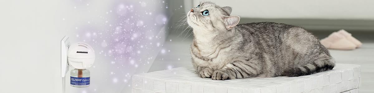 FELIWAY est recommandé par des vétérinaires et des propriétaires de chats.
