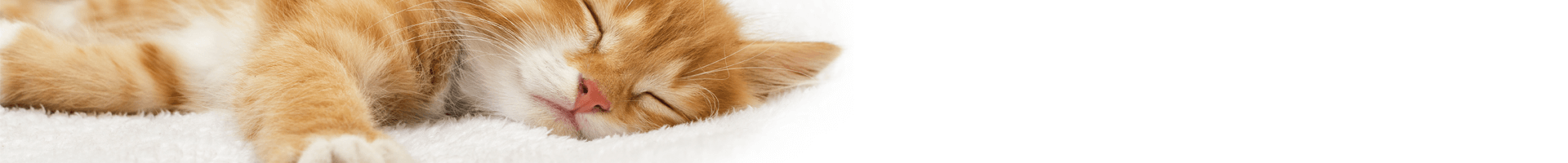 Katzenbaby im neuen Zuhause eingewöhnen: Die 6 besten Tipps