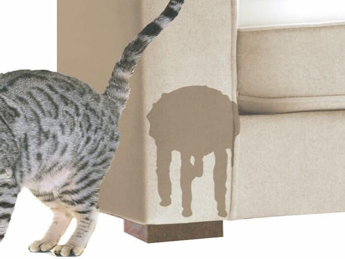 Kočka čůrá mimo kočičí toaletu