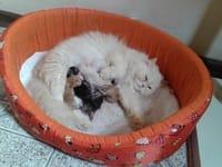 kattenconflict