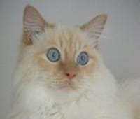 Marley le chat