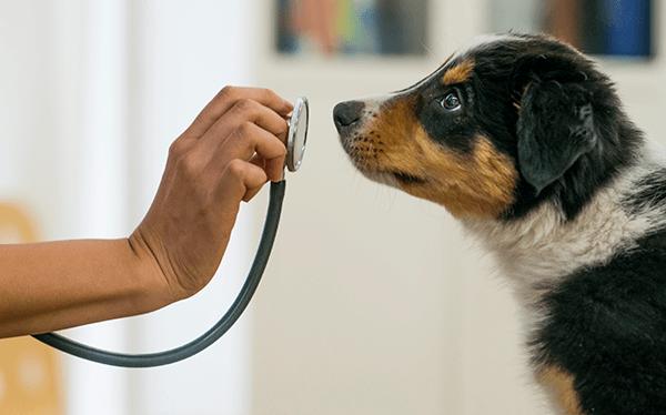 Er sucht sie tierarzt